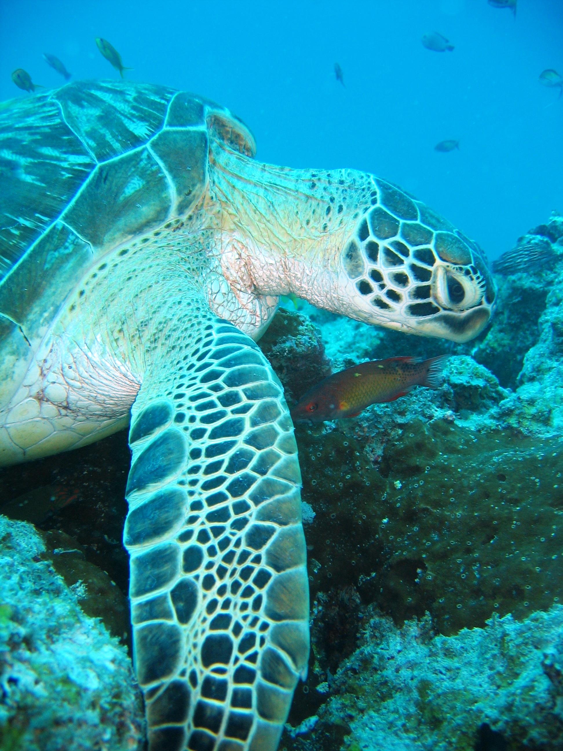 Diving & Snorkeling - Zanzibar Tours, Zanzibar Cultural ...